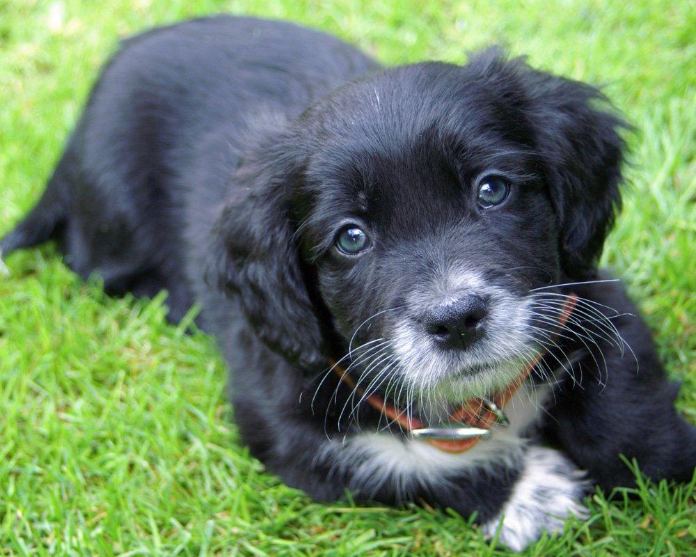 Taunton Puppy Training Classes